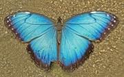 natures_symmetry_202_b