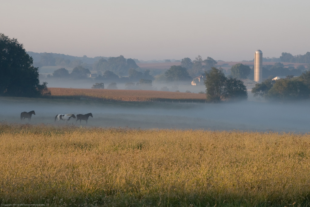 Horses_in_the_Mists
