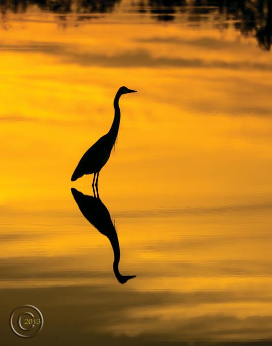 Heron_on_Still_Water_Silhouette