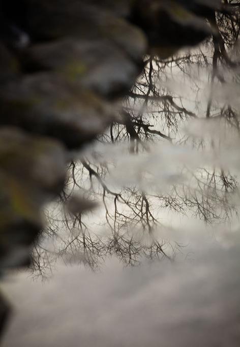 trees_in_winter