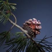 pinecone_glow