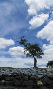 a_basket_and_a_blue_sky
