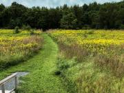 Adkins_Arboretum_Meadow