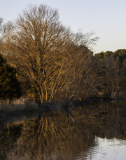 golden_trees