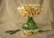 vase_of_daffodils