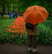 orange_umbrella