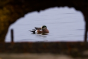 Jersey_Barrier_Widgeon