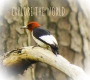 explore_the_world