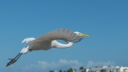 flight_over_palm_beach