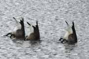 synchronized_swimmers