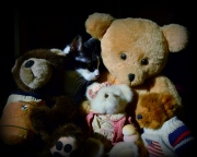 cat-amongst-the-bears