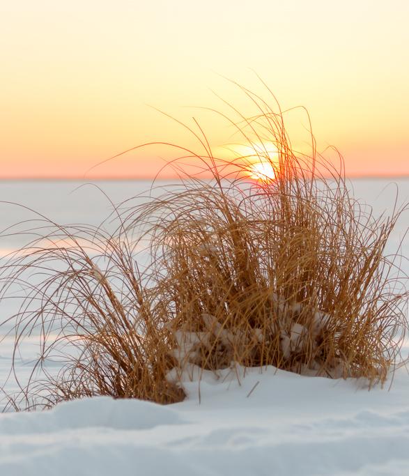 Snowy_Beach_Grass