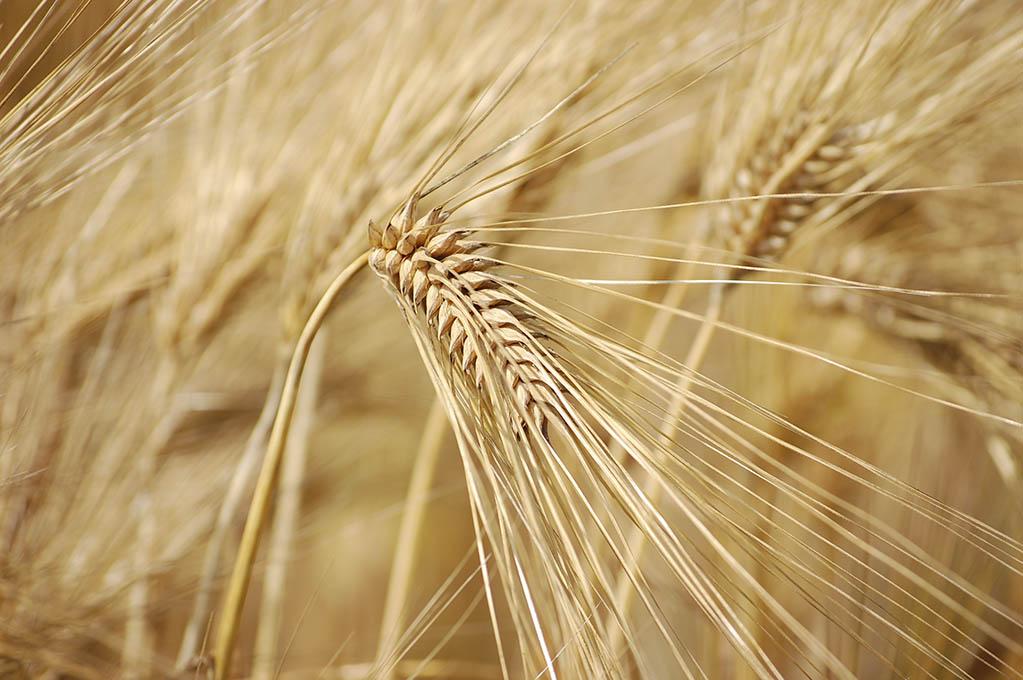 harvest time