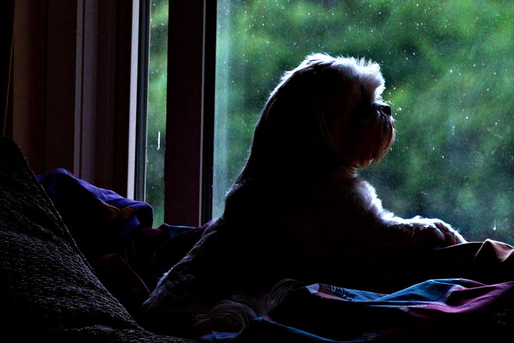 Abby_in_window