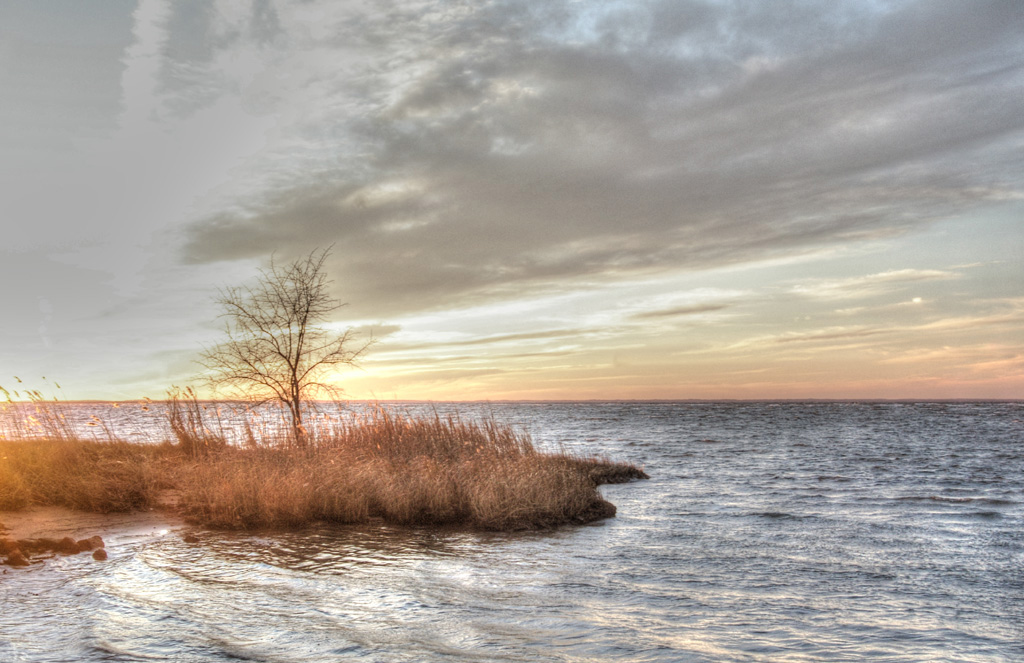 Tree_on_ Eastern_ Bay