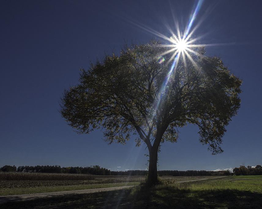 Wye Island Tree