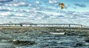 baybridge windsurfer