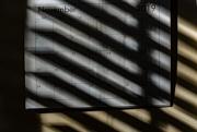 november_shadow