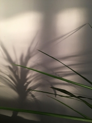 shadow_palm