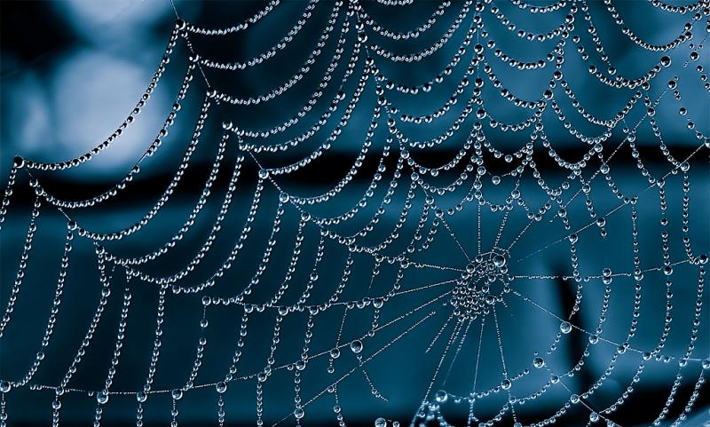 blue_web