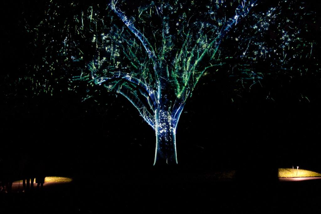 Tree_of_Nightlife