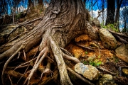 roots_and_rocks