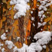 snow_maze