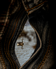 zipper_goose