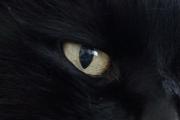 charlies_eye