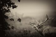 fog_horn