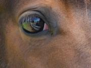 Thru_His_Eye