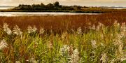 eastern_neck_grasses