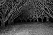 whispering_trees