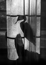 bay_window_heron