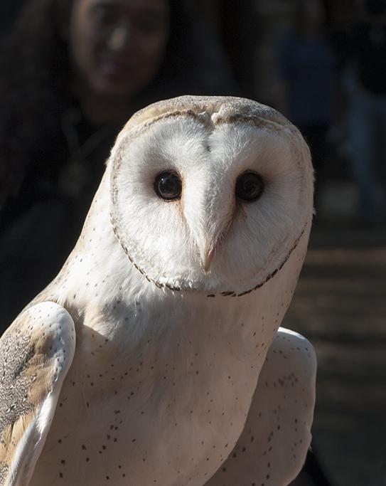 Owl_View