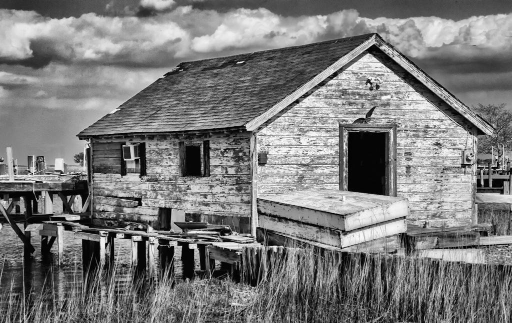 This_Old_Shack