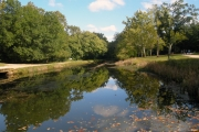 Reflections on canal path
