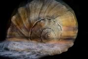 Shellscape
