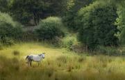greener_pastures