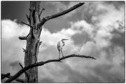 Bird_In_Tree