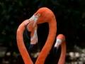 Cal Jackson-zoo2