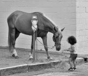 Horse_Parking