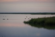 bombay_hook_shearness_pond_sunrise_geese