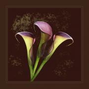 trio_of_calla_lilies