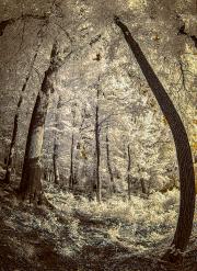 hobbit_trail