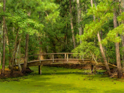 secluded_bridge