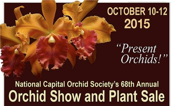 10-5-orchid-show2