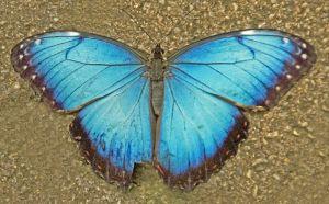 Natures_Symmetry_202_b.jpg